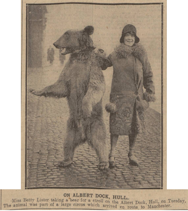 historical newspaper story about the a lady walking her bear in Hull