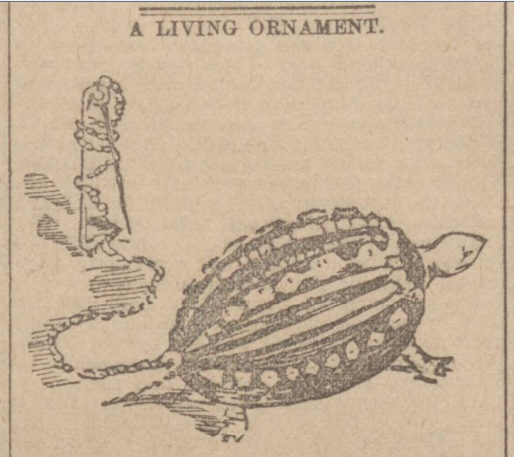 historical newspaper report on tortoises