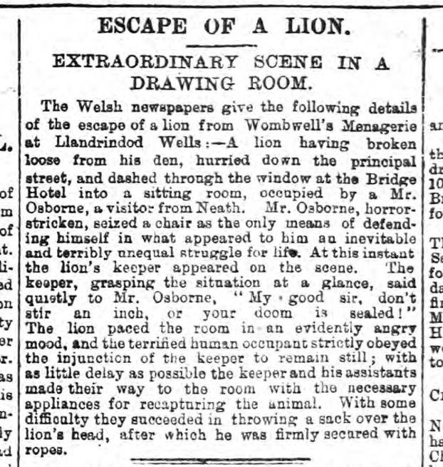 historical newspaper report about an escaped lion