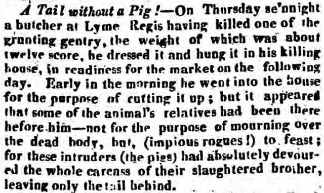 Article about a tail without a pig
