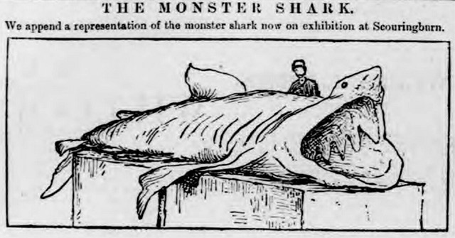 An image of a monster shark, printed by the Dundee Courier