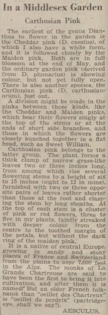garden in Middlesex Chronicle
