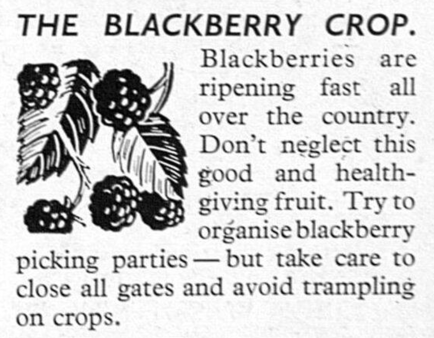 Blackberry crop