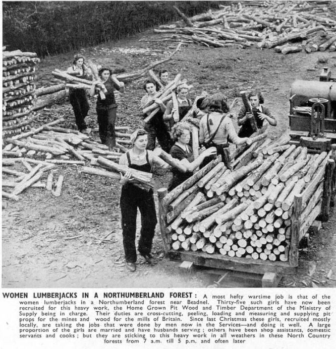 TImber Corps